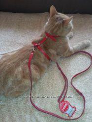 Шлейка поводок для котов и собак КОЖА