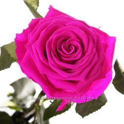 долго свежая роза Малиновый родолит живая, сохраняется без воды до 5 лет
