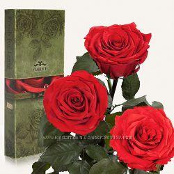 Алый рубин, 3 шт. долгосвежая роза Florich, живая стоит без воды 5 лет,