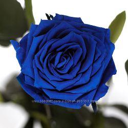живая Синяя роза без подарочной упаковки не вянет без воды до 5 лет