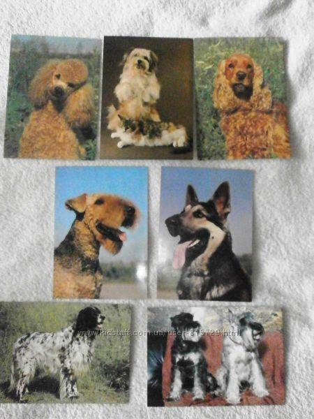 Коллекция открыток и календариков с собаками.