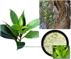 Sweetscents - праймер Бамбуковая пудра, ночной уход Зеленый чай и др.