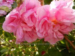 Натуральная болгарская розовая вода Lema-супер цены