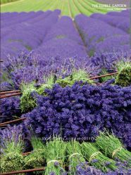 Новая уходовая серия от Refan Provence Lavender с болгарским йогуртом