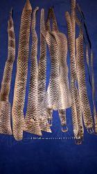Кожа змеи, натуральная Ремень или пояс 1шт. на выбор