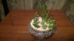 Подарок интересные растения в керамической вазе