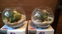 Флорариум, Композиция из  растений на подарок