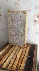 Мёд разнотравье свежайший