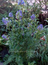 Садові квіти. Цвети