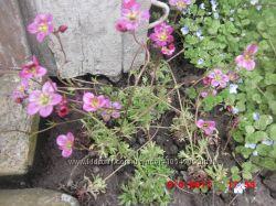 квіти. цветы