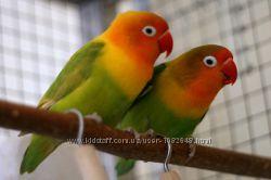 Передержка присмотр птиц в Одессе