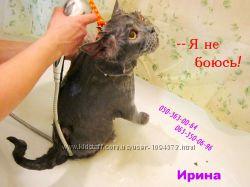Как преобразить кошку. Оставьте хлопоты профессионалам