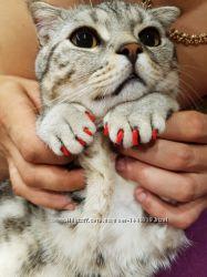 Накогтники - колпачки, антицарапки  для собаки кота