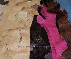 Натуральная кожа аллигатора