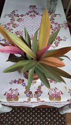 РЕО-кімнатні квіти, рожево- зелене, салатове