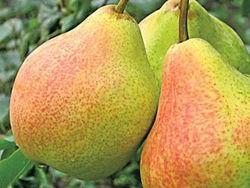Сухофрукти, сушки яблука, груші, слива, кізіл, вишня