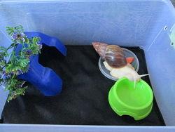 Мат для содержания улиток матрасик матик в террариум контейнер
